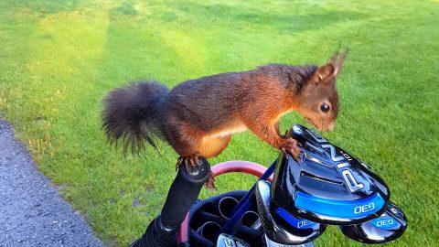Die Eichhörnchen von Loch-8 und 13