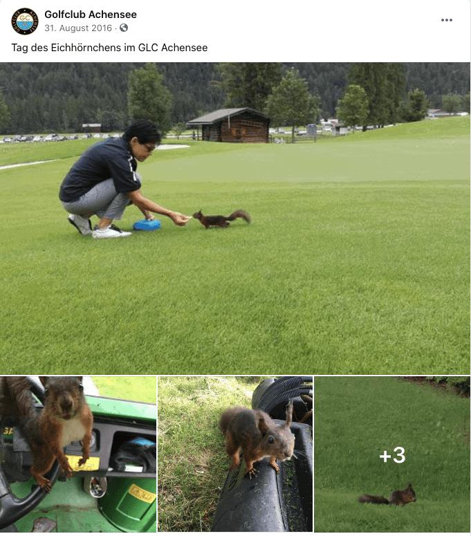 Eichhörnchen am Golfplatz Achensee
